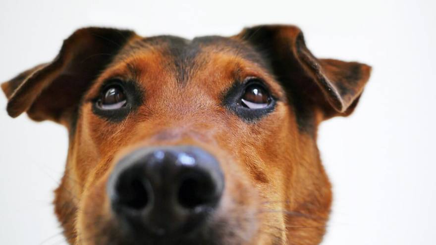 Best Dog DNA Tests [Most Accurate]