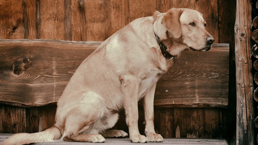 Carprofen for Dogs - What Vets Don't Tell You