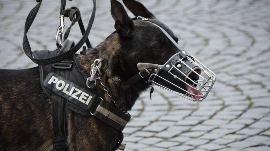 Best Police Dog Breeds (With Photos)