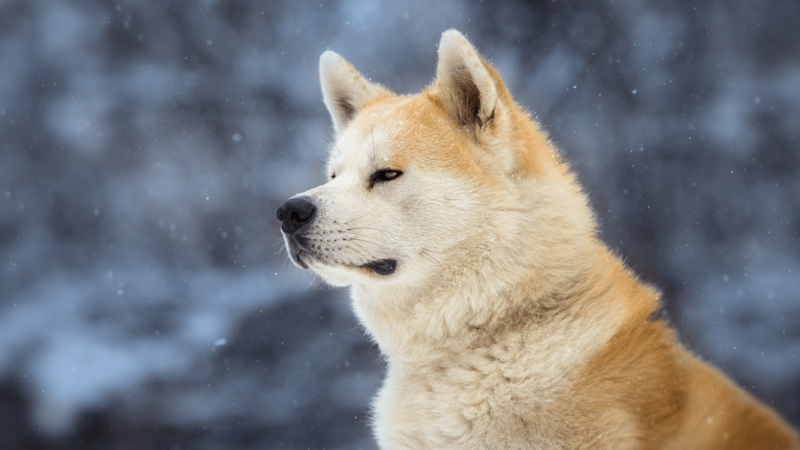 7 Most Famous Dogs in History