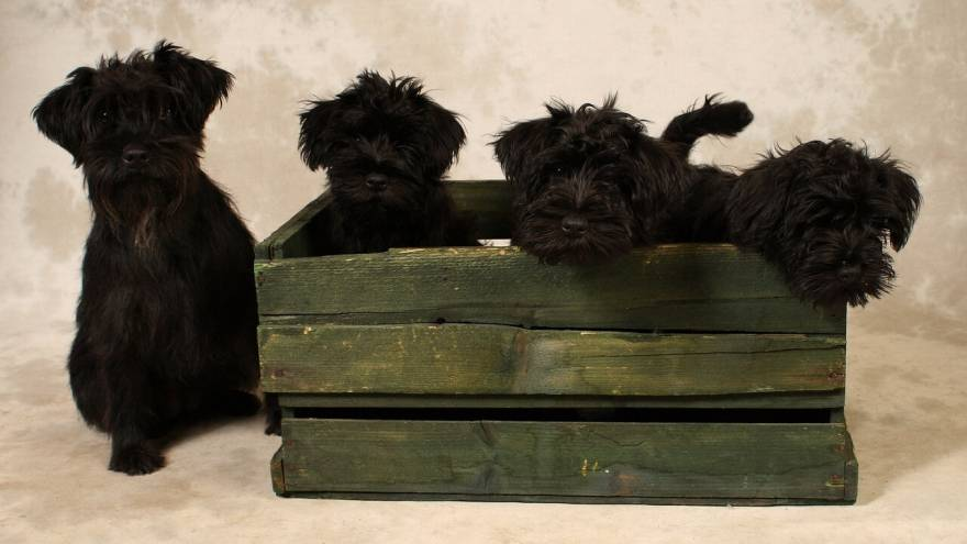 Best Wooden Dog Crates in 2021