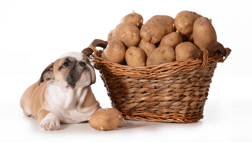 Can Dogs Eat Potatoes?