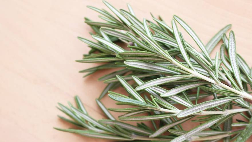 Is Rosemary Safe for Dogs?