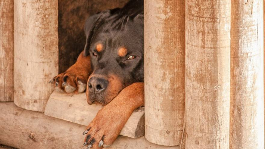 Sucralfate for Dogs - What Is It & How It Is Given