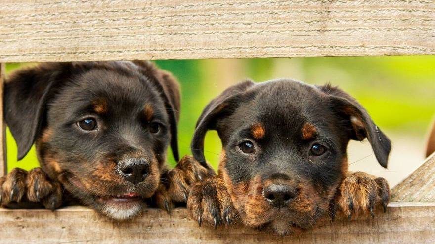 New Puppy Checklist - Here's What You'll Need