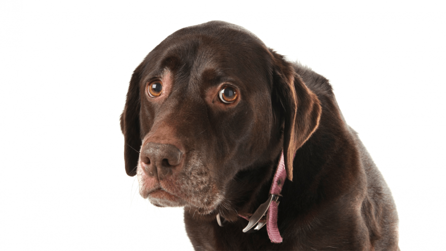 Is Your Dog Throwing up Clear Liquid?