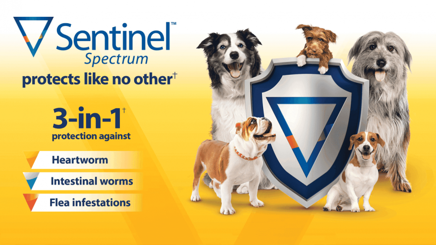 Is Sentinel Spectrum a Good Choice For Dogs