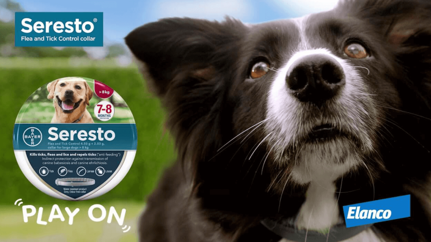 Are Seresto Collars for Dogs Safe?