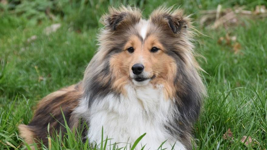 List of the 10 Smartest Dog Breeds