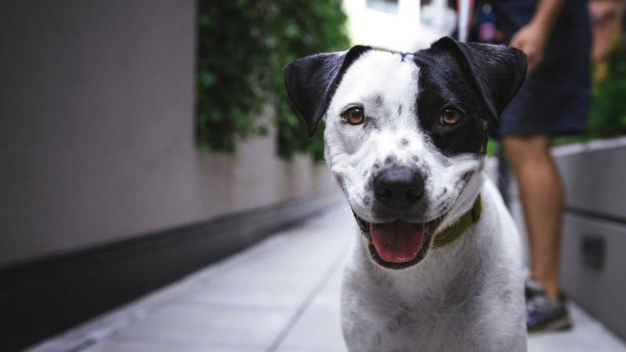 Can Dogs Actually Smile or is it Just in Our Heads