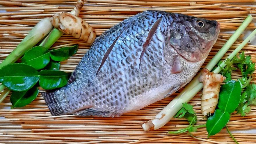 Can Dogs Eat Tilapia
