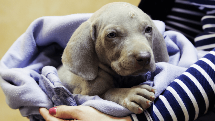 Cephalexin for Dogs: Dosage, Side Effects & Buying