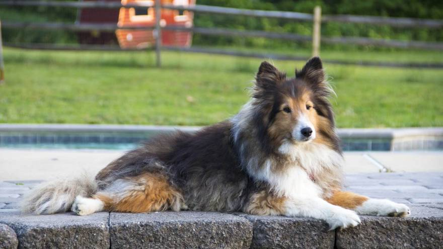 What is the Right Dog Breed For Me?