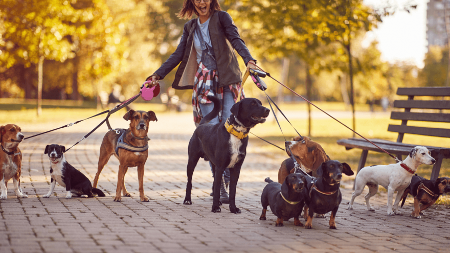 How to Find a Dog Walker