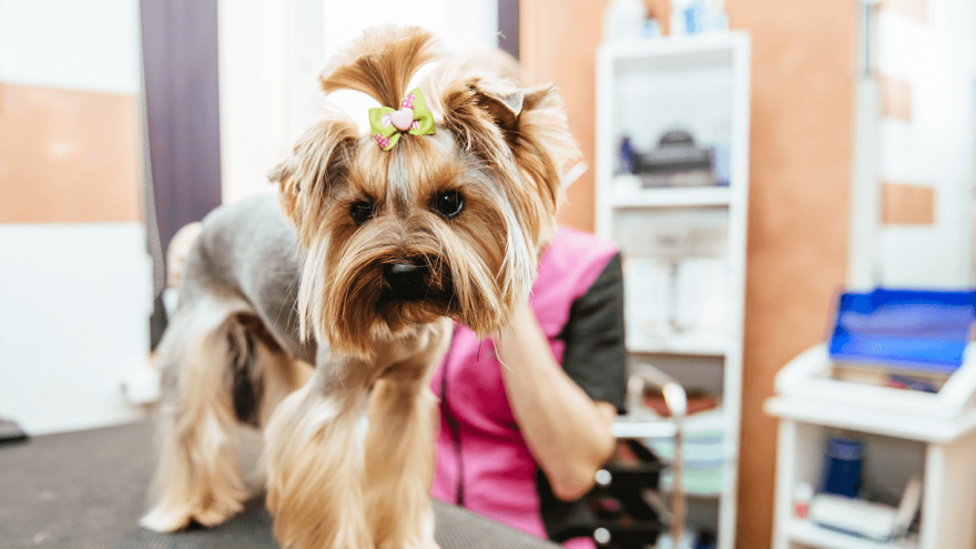 8 Things to Ask Potential Groomers Before You Choose The Right One