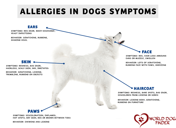 allergies in dogs symptoms