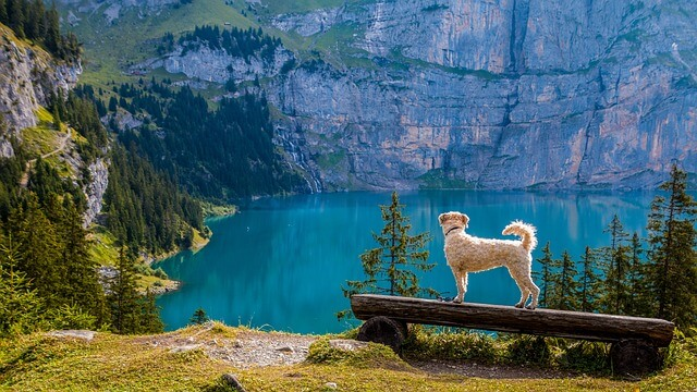 dog lake background