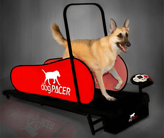 DogPACER Full-Size Treadmill