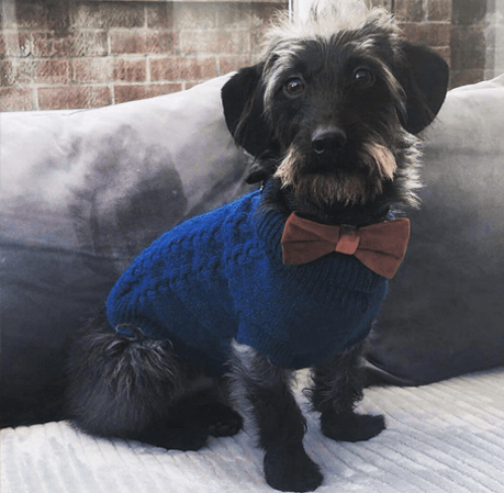 doxiepoo in a sweater