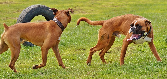 playful boxers