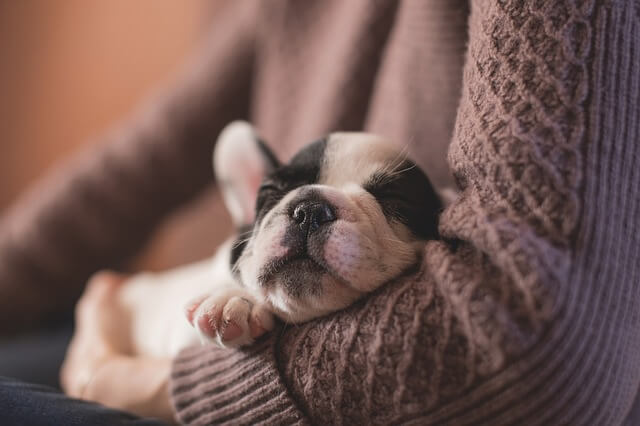 puppy sleeping in arms
