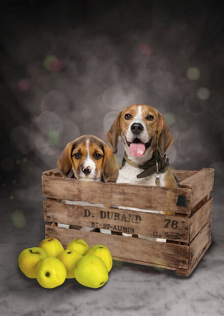 two dogs in crate